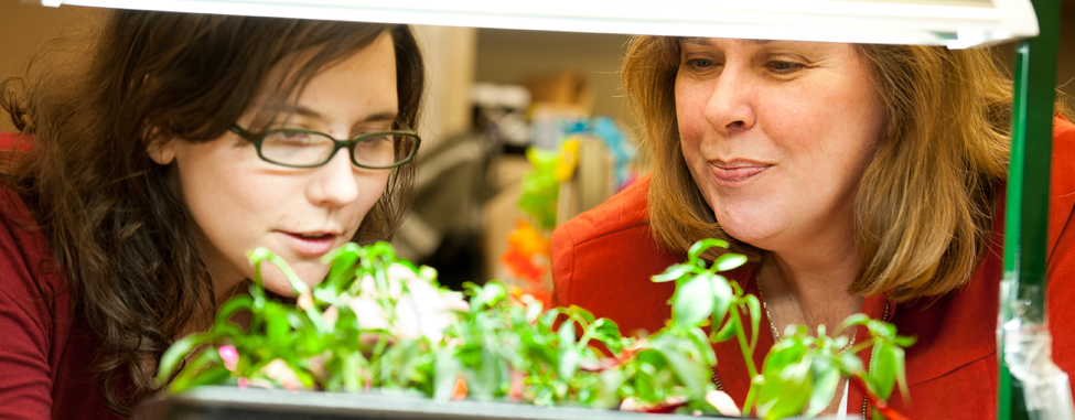 researchers looking at plants